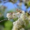 🌸桜と新緑の新宿御苑🍃