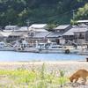 福岡市から近くて癒される猫の島に行ってみた!②【相島】