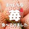 【ふるさと納税で楽しめる】まっしろな苺、パールホワイトをいただきます!