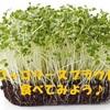 ブロッコリースプラウトって何?栄養・効果・栽培方法を紹介