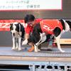 EZYDOG 4/28トレッサ横浜ドッグダンスショー&体験会のご報告!