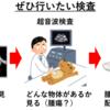 犬猫の肝胆道系腫瘍②~症状と検査方法~