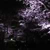 No.25 佐倉の桜 佐倉城址公園