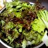 【今日のごはん】サニーレタスのあっさりサラダ!