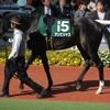 中山記念2017 アンビシャス 馬体状態・追い切り