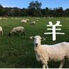 ニュージーランドといえば羊!シープ・ザ・写真集!