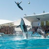 鴨川シーワールドのクーポン|大人入園券2,000円で日本最大級の水族館を満喫♪