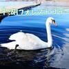【キャンプ場レポ】②小田急山中湖フォレストコテージ 湖畔サイト