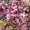 美しいトロントの春 ~世界一周・特典航空券の旅~