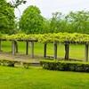 天久保公園の藤~つくば市とその周辺の風景写真案内(399)