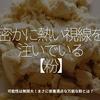617食目「密かに熱い視線を注いでいる【粉】」可能性は無限大!まさに栄養満点な万能な粉とは?