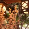 2018 川越・春散歩