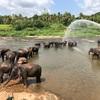 日本じゃ見れない象の群れ!近くまでいける!スリランカのピンナワラ像の孤児院