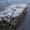 和歌山は雪ですよ