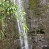 ハワイ 山登り(トレッキング) 安く簡単に行くマノアの滝