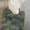 【福壽堂本店】和菓子で芸術作品みたいなやつ作る人のお店【姫路】~事業者紹介~