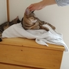 命の母よりPMSに効く!?~猫の存在が、ワーママの疲れ、イライラを半減してくれる