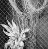 咲 墨 sakusumi  —街に咲く墨—