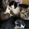 10月20日|子猫の生命力に感謝。そして人間の罪深さに慄く。~活動の限界? 命の限界?(その3)~