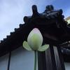 資本は捨てると幸せになる!?「幸福の資本論」と仏教の関係