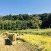 鹿嶋パラダイスの稲刈り