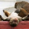 ネパール旅行2日目その1 恐怖の自然史博物館と、サルにココナッツを盗られた話