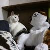 家族とはなんなのか、猫を見て考えた