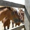 馬に恋する若者が与那国島を目指すべき10の理由 ⑩