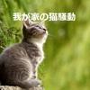 我が家の困った「猫」騒動^^;