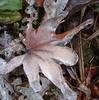 最強寒波がもたらした氷の芸術