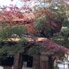 今日から日曜までの三日間、「中部大学祭」が開かれています。さて、今日は定光寺の紅葉を見に行きました。