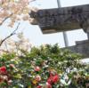 【2017年4月30日】日本名刀展第一部「見どころ学べる!目で観る刀の教科書」展(致道博物館)