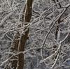 雪のくろんど「獅子窟寺への道」