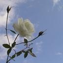 rojiura2's blog