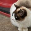繁華街の猫
