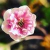 最近の好きな花