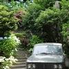 6月の鎌倉を観に