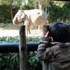 1歳児と行く よこはま動物園ズーラシア 冬も楽しい動物園!