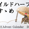 ワイルドハーフのすゝめ【遊戯王Advent Calendar24日目】