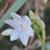 真っ白な水仙の【花言葉】