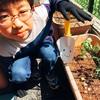 組み合わせの大定番!中玉トマトと、コンパニオンプランツのバジルを植えてみた[プランター菜園]