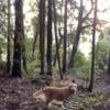 11歳のゴールデンレトリバーと歩く山歩きの13分間。