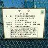 薬用植物園 ケシ・麻