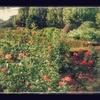 御苑と代々木公園