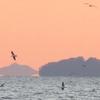 本邦初公開⋯浮島現象の極致⋯海面から離れた空中の島