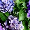 タモキシフェン、オーソライズドジェネリック(AG)発売-第一三共エスファ「DSEP」