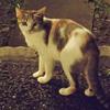 夜のノラ猫