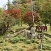 〈個人山行〉関西百名山シリーズNo.73~76  大峰奥駈道釈迦ヶ岳から大普賢岳