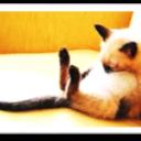 猫でも分かる経済指標