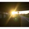 オーストラリア写真日記3 8年目の連れOLYMPUS PEN-EP3 と共に夕方散歩道。
